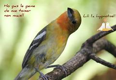 Ce joli Oiseau et moi nous vous souhaitons un agrable samedi. (liliane776.) Tags: oiseau