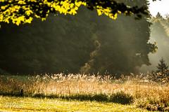 I see a ghost . . . (Dr. Farnsworth) Tags: shadows orchard ferns weeds ghost dew sunshine sunrise evaporation image morning fernridge mi fall september2016