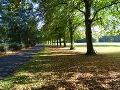 Calderstones Park (Puerto De Liverpool.) Tags: calderstonespark parksandgardens woodland nature liverpool merseyside england uk trees autumn pathway autumncolours fallenleaves shadows sunlight