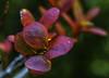 Høstrødt (wollruth) Tags: høstfarge rødt natur