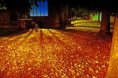 Autumn calling (fernando butcher) Tags: shadows nik efex church light autumn fall nikon d7000 sigma trees iso 1750