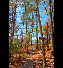 Overlook Trail - Vigin Falls State Natural Area (J.L. Ramsaur Photography (Thank You for 4 million ) Tags: jlrphotography nikond7200 nikon d7200 photography photo spartatn middletennessee whitecounty tennessee 2016 engineerswithcameras cumberlandplateau photographyforgod thesouth southernphotography screamofthephotographer ibeauty jlramsaurphotography photograph pic sparta tennesseephotographer spartatennessee virginfallsstatenaturalarea virginfalls virginfallsstatepark marthasprettypoint overlooktrail tennesseehdr hdr worldhdr hdraddicted bracketed photomatix hdrphotomatix hdrvillage hdrworlds hdrimaging hdrrighthererightnow fall fallcolors fallleaves fallseason fallinthesouth colorful colors autumn autumncolors autumninthesouth autumnleaves falltrees autumntrees hiking hikingtrail landscape southernlandscape nature outdoors godsartwork naturespaintbrush sign signage itsasign signssigns iloveoldsigns iseeasign signcity trail