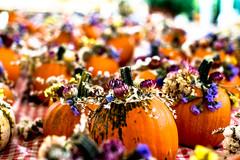 pumpkin time (-gregg-) Tags: fall pumpkin decoration flowers bokeh