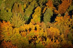 Trees in Fall (PiConsti) Tags: piconsti fall herbst bume baumkrone baumkronen wipfel laub bltter laubwerk pracht trees leafs forrest wood wald herbstwald orange green red brown grn rot braun switzerland burg