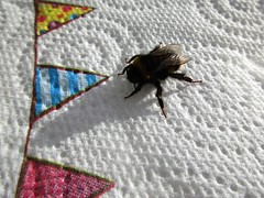 Bee rescue HWW! (JulieK (finally moved to Wexford)) Tags: hww bumblebee wing insect macro rescue canonixus170 fauna invertebrate nature