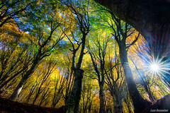 throw the forest (Luca-Anconetani) Tags: alberi bosco lights shadows sun natura italy forest lucaanconetani nikon ombre autumn autunno foglie trees leaf leaves landscapes landscapesdreams luce sole sunrays