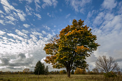 Puu-2 (Raimond Z.) Tags: puu tree autumn fall sgis syksy sky taevas