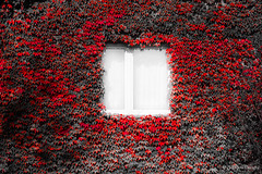 Window (z.dorighi) Tags: mysterious window red leavaes autumn horror fall white ivy wall