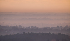 Layers (Rob Pitt) Tags: morn morning mist fog trees layers delamere forest paleheights cheshire