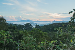 Sunrise at Canopy Tower - Panama (Hamilton Images) Tags: tropicalforest clouds mist sunrise canopytower panama centralamerica canon 7dmarkii 24105mm october 2016 img4956