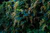 An der Wuhle (naturlicht) Tags: wuhle wildpflanze berlinhellersdorf berlin deutschland