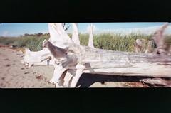 012_12 (*Snap_Shot*) Tags: anscopanoramapix ansco panorama plasticcamera plasticlens flippedlens plasticfantastic jettyisland everett everettwa seattleflickrmeetup msejettyisland1308 anscopixpanorama buyfilmnotmegapixles flimsnotdead expiredfilm fujifilm200 beliveinfilm ishootfilm 35mm panoramic fakepanorama poe portofeverett