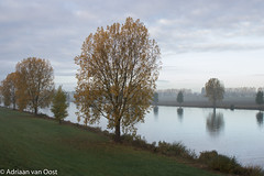 fall at the riverside (Adriaan van Oost) Tags: colors fall autumn maas river riverside heusden holland brabant