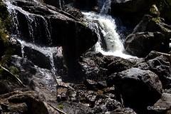 St Columba Falls (Kev Peirce) Tags: waterfall falls water rocks tasmania