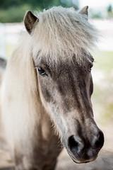 cutie (mightymuffinful) Tags: hest equine smile cute pony caballominiatura farm ranch horse miniatyrhest animal