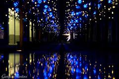 Reflexes (gibrgio91) Tags: reflexes lights christmas berlin germany deutschland night blue gold alexanderplatz