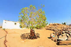 Welcome to Nubia... (nomade_du_temps) Tags: nubia aswan heisa island tree sand nikond7000 valley nile ancient times highdam