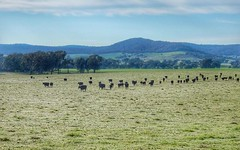 Pleasant View - 130 Creasys Road, Mangoplah NSW