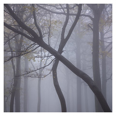 Crossed (Damian_Ward) Tags: damianward photography ©damianward oxfordshire trees chilterns chilternhills thechilterns fog mist