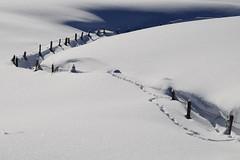 *S*N*O*W* (JohannesMayr) Tags: schnee snow allgäu wertach zaun fens schatten licht