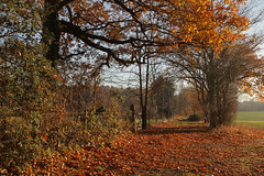 Winter Kent Views (Adam Swaine) Tags: autumn autumncolours autumnkent trees counties countryside ukcounties leaves canon english england englishlandscapes britain british uk rural walks seasons swaine