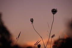 Couleurs d'hiver - Toulouse (31) (FGuillou) Tags: douceur fin de journe sky shadow ombre fleur branche rose toulouse francia france