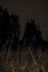 rata (Vairon Vidal /mundanavilla) Tags: chile travel viajes paisajes sur patagonia chilena patagoniachilena fotografía fotografiadocumental fotografias artefotográfico fotocallejera fto foto canon 70d eos videoclip volnitza viaje ruta 5sur 5 infecta fire femenino etcétera aof caos artofvisuals shoot zen magazine matucana revista turismo hermosa hermosura belleza natural naturaleza insurreccion surrealismo surrealista poemasvisuales poética
