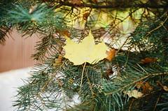 (irina  birdie) Tags: filmphoto filmphotography film flora forest filmgrain 35mm 35mmfilm plenka  analog analogue analogphotography analoguephotography autumn autumnleaves squirrel