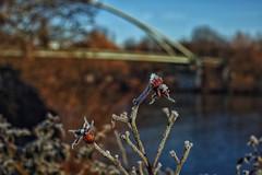 Frosty day... (hobbit68) Tags: frosty cold kalt wasser water bridge brcken main frankfurt
