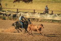 Powlathanga Campdraught (robertdownie) Tags: gate hat horse cow cowboy dust australia ring dirt beast queensland riding cowboys outback cattle horseback cut out riders far north stockmen drovers fnq powlathanga campdraught