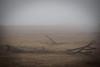 No hope (Jose Viegas) Tags: mood fog sadness deadtrees olympusem5ii