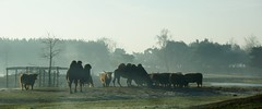 Samenscholing. (limburgs_heksje) Tags: nederland niederlande netherlands noord brabant beekse bergen safaripark dierenpark