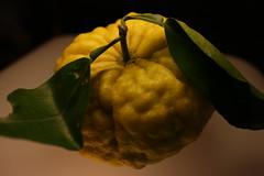 a citrus fruit (sogni_hal) Tags: citrus citrusfruit fruit green stilllife yellow