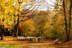 Have a break (sagur1) Tags: haveabreak platinumheartaward trees fall indiansummer herbst tree