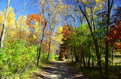Afton State Park (Liz Nemmers) Tags: statepark park autumn red orange green fall nature water leaves minnesota yellow river photography nikon fallcolors twincities mn aftonstatepark stcrioxriver nikond3100