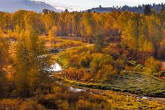 Morning color (John Sieber) Tags: montana fallcolors bitterrootriver