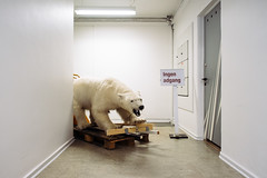 Polar Bear by Jess P.C. - on a pallet