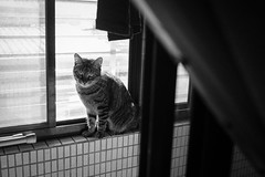 (Sherwin_andante) Tags: cat fujifilm toro  2014 xe1  201410 fujifilmxe1