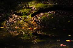 a quiet pond (JTeale) Tags: fall leaves pond colours korea southkorea