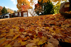 Autumn Evening (chrishowardphotography.com) Tags: autumncolors autumntrees autumnevening beautifulautumn autumninohio
