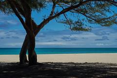 Waimānalo Shade (ggppix) Tags: ocean sky sun tree beach silhouette clouds hawaii sand highway surf pacific oahu hwy shade sherwoodforest ironwood recreationarea captureonepro kalanianaole route72 casuarinaequisetifolia waimānalo horsetailcasuarina waimānalobay fujifilmxpro1 fujinonxf35mmf14r garyglenprice kalaniana'ole