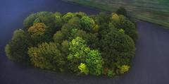 Autumn trees (kjetilpa - landsca