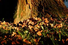 Komadić jeseni (Corner Fall)