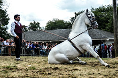 Eduardo and Cao Vista (yasminabelloargibay) Tags: horse caballo cheval grey bay cavalier cavallo cavalo pferd stallion hest andalusian paard dressage horserider gelding