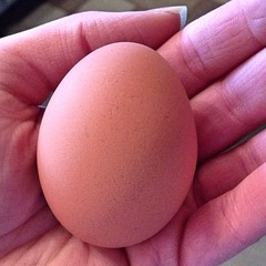 "Is there anything more beautiful than a fresh egg? I don't think so!  #chickens #food #eatlocal • <a style=""font-size:0.8em;"" href=""http://www.flickr.com/photos/54958436@N05/15253679550/"" target=""_blank"">View on Flickr</a>"