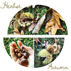 Herbst. | Autumn.  #autumn #autumninlove #travel #travelblog #travelingram #enjoy #kiraton #kiratontravel #lovewhatyoudo #kastanien #chestnut #hooray #hoorayfortoday #worlderlust #conker #rosskastanie #herbst #horsechestnut