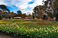 Field of Flowers (evangelique) Tags: park flowers color colour festival botanical lights spring tulips canberra commonwealth act floriade 2014 nightfest