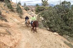 P9080564 (bluegrass0839) Tags: canyon national hoodoo bryce zion zionnationalpark brycecanyon nationalparks narrows hoodoos horsebackride parkthe