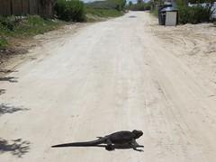 Galápagos - Isabela-55