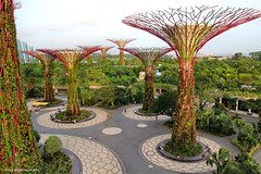 Supertrees Grove, Gardens By The Bay South, Singapore (Black Diamond Images) Tags: supertrees gardensbythebay marinabaysands singapore worldsbestgardens gardenssingapore singaporegardens gardens supertreegrove supertreesgrove marinabay fantasy nature architecture tourismattraction trees iconiclandmarksofsingapore bestofsingapore garden singaporelandmarks attractions gardensbythebaysouth singaporecity explore bdi